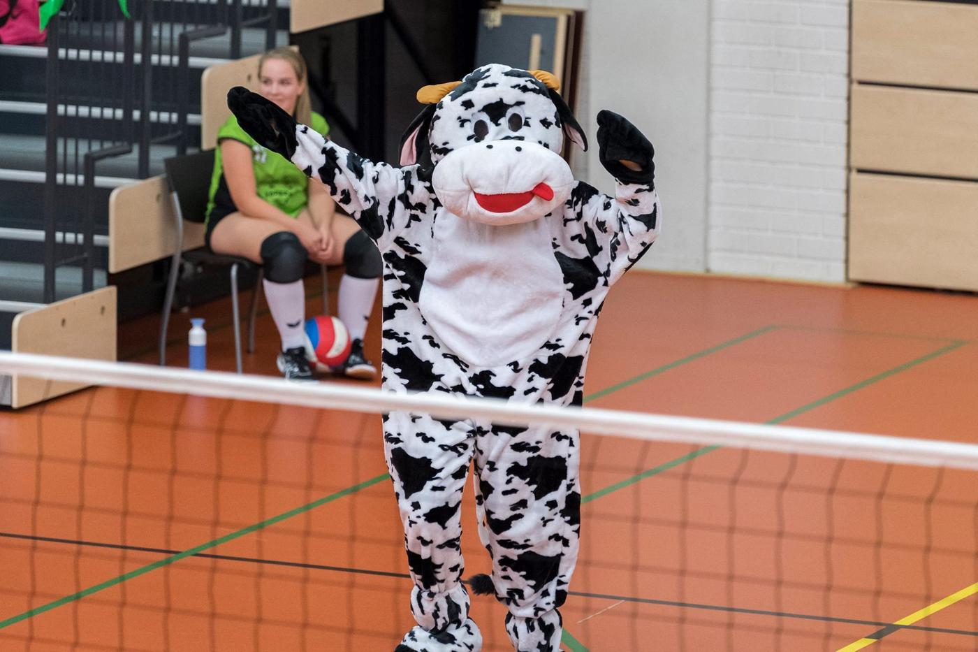 Vera de koe